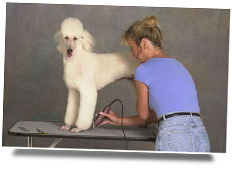 Golden Paws Mitzi Parish poodle dog grooming