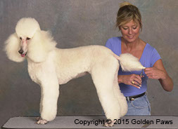 Mitzi Parish grooming a dog tail. Golden Paws