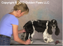 dog grooming Mitzi Parish Golden Paws